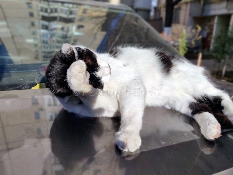 Γάτα στην ηλιοφάνεια πρωινού στοκ φωτογραφίες