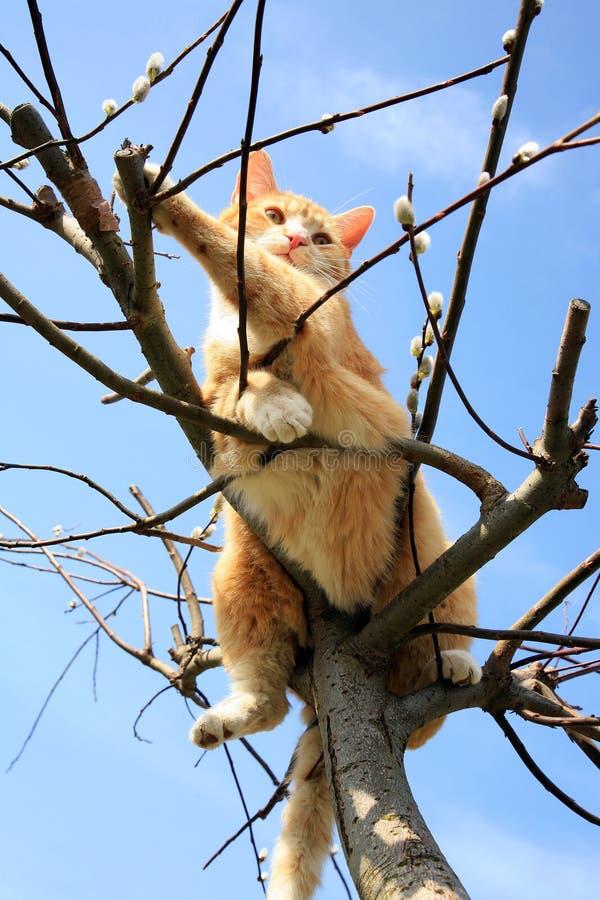 Γάτα στην ιτιά στοκ εικόνες