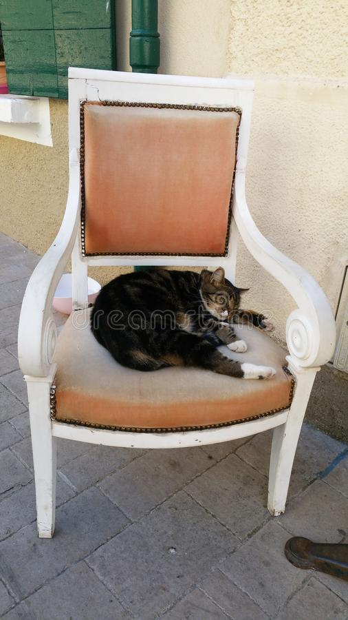 Γάτα στην καρέκλα στοκ εικόνες με δικαίωμα ελεύθερης χρήσης