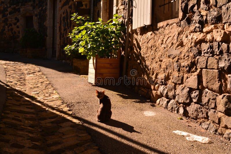 Γάτα στην οδό Mirabel στο Ardeche στοκ εικόνα
