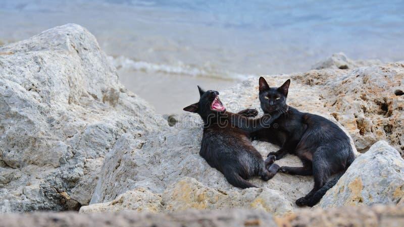 Γάτα στην παραλία στοκ φωτογραφία