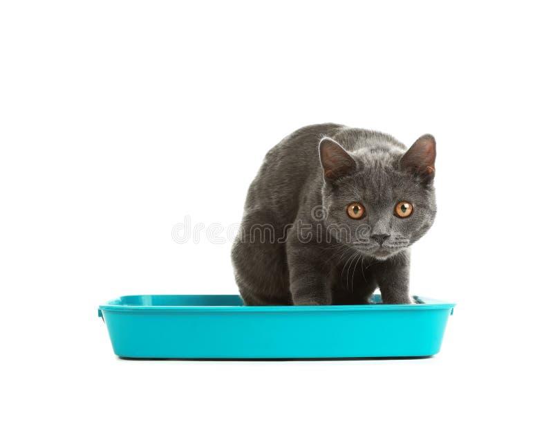 Γάτα στην τουαλέτα κατοικίδιων ζώων στοκ εικόνα