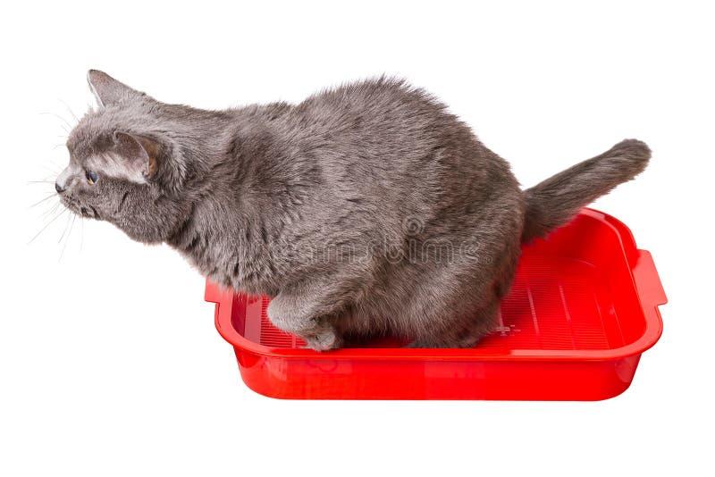Γάτα στην τουαλέτα στοκ φωτογραφία