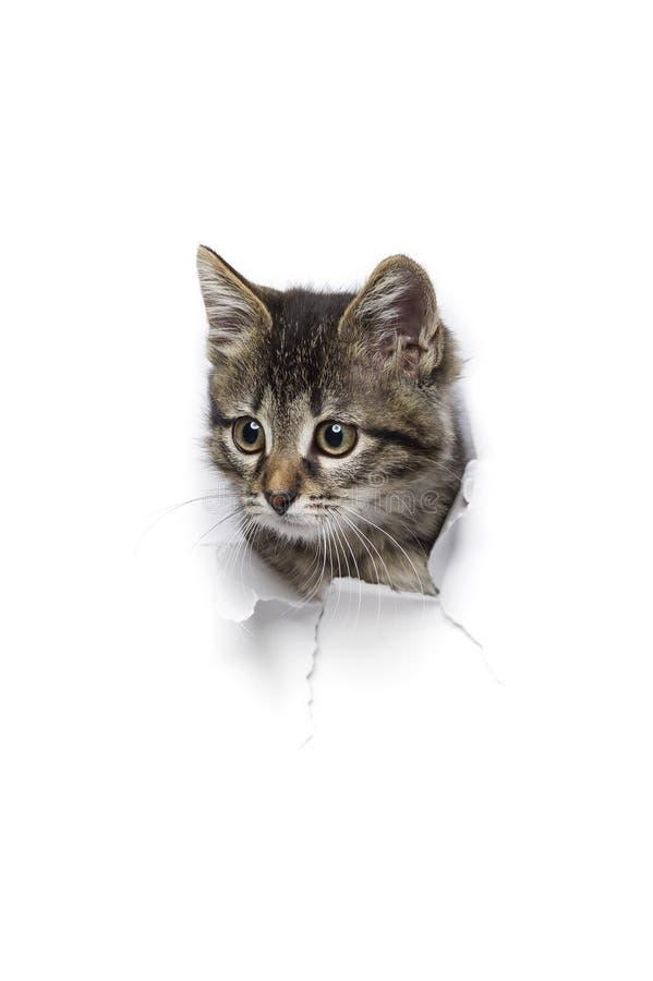 Γάτα στην τρύπα του εγγράφου στοκ εικόνες