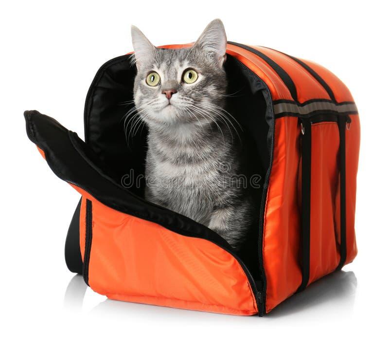 Γάτα στην τσάντα μεταφορέων στοκ εικόνες με δικαίωμα ελεύθερης χρήσης