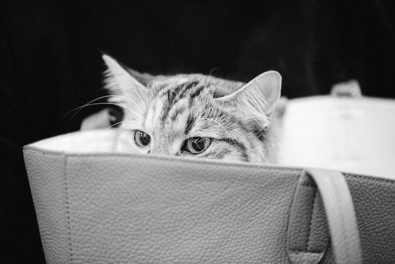 Γάτα στην τσάντα στοκ εικόνες