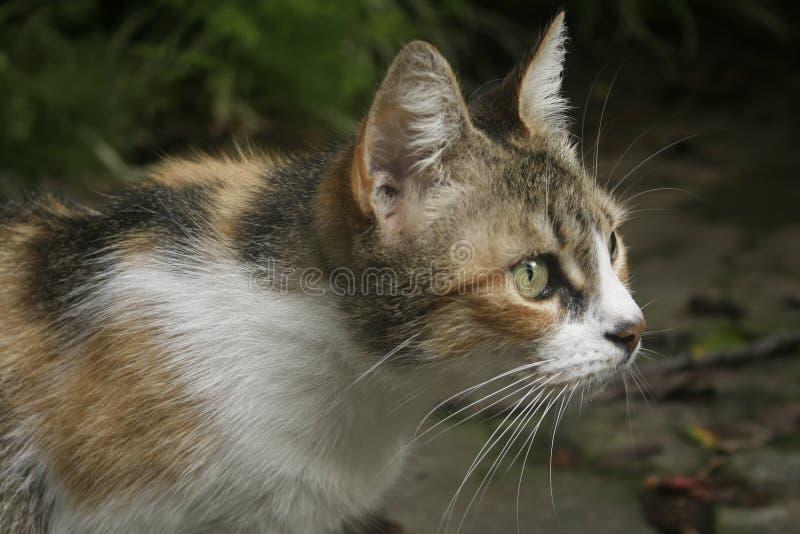 Γάτα στη θέση επίθεσης στοκ φωτογραφία με δικαίωμα ελεύθερης χρήσης