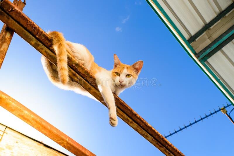 Γάτα στη στέγη στοκ φωτογραφίες με δικαίωμα ελεύθερης χρήσης
