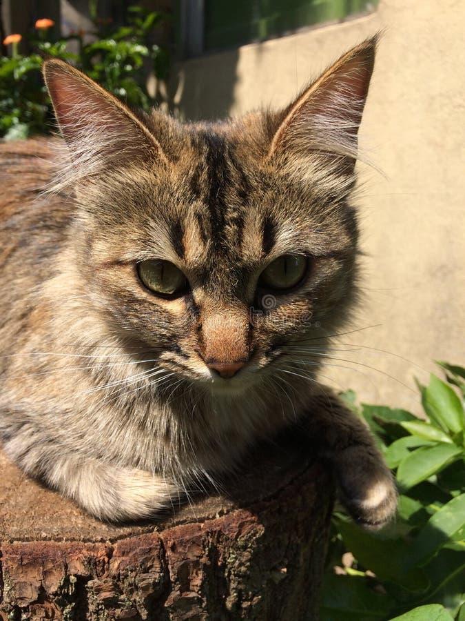 Γάτα στη στήριξη στοκ φωτογραφία με δικαίωμα ελεύθερης χρήσης