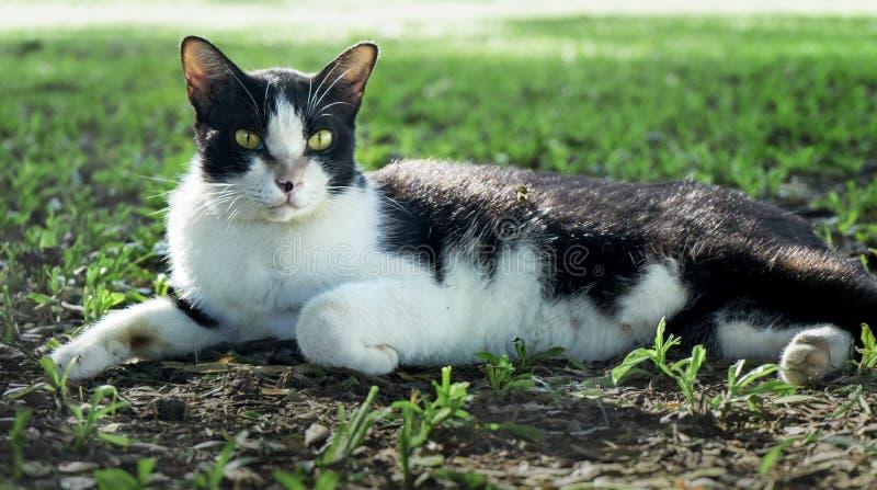 Γάτα στη φύση στο πάρκο στοκ φωτογραφίες