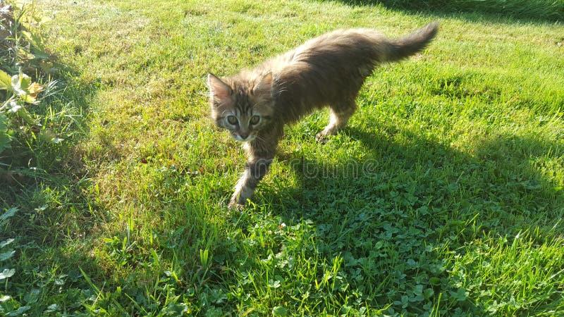 Γάτα στη φύση στοκ εικόνες