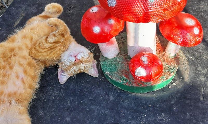 Γάτα στον ήλιο και μανιτάρια στοκ εικόνες