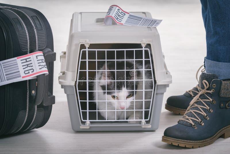 Γάτα στον αερομεταφορέα μεταφοράς φορτίων για κατοικίδια ζώα στοκ εικόνα