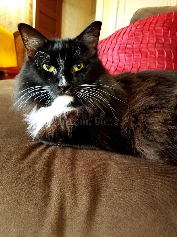 Γάτα στον καναπέ στοκ εικόνες με δικαίωμα ελεύθερης χρήσης