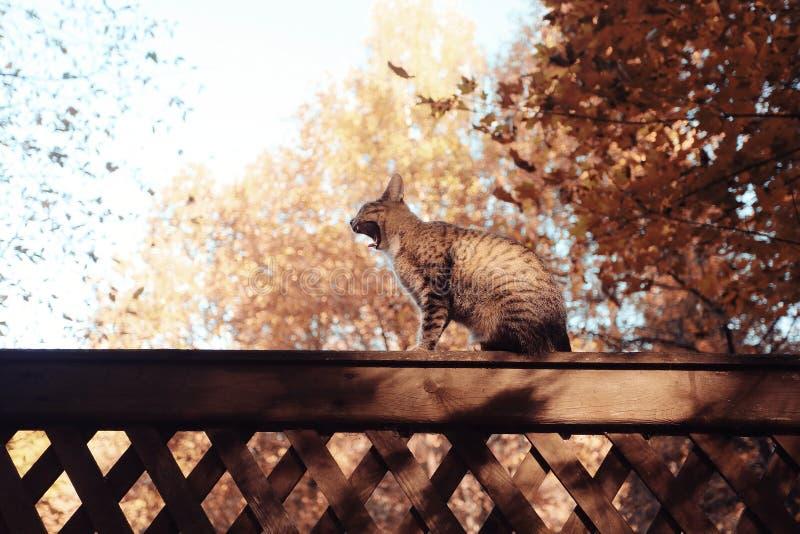 Γάτα στον ξύλινο φράκτη στοκ φωτογραφίες με δικαίωμα ελεύθερης χρήσης