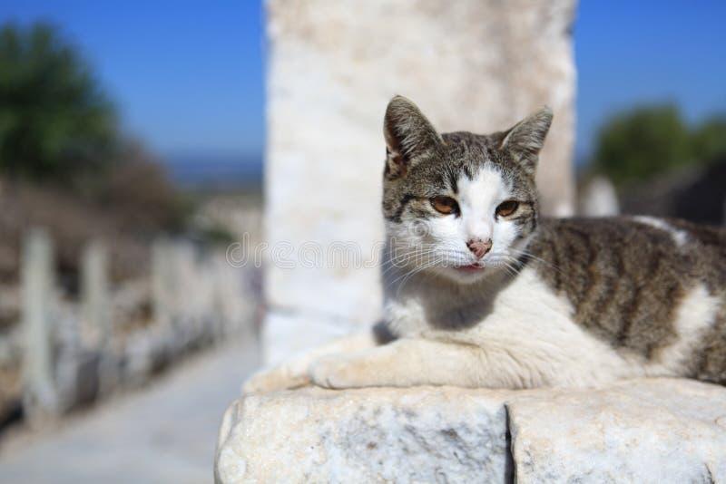 Γάτα στον τοίχο στοκ φωτογραφία με δικαίωμα ελεύθερης χρήσης