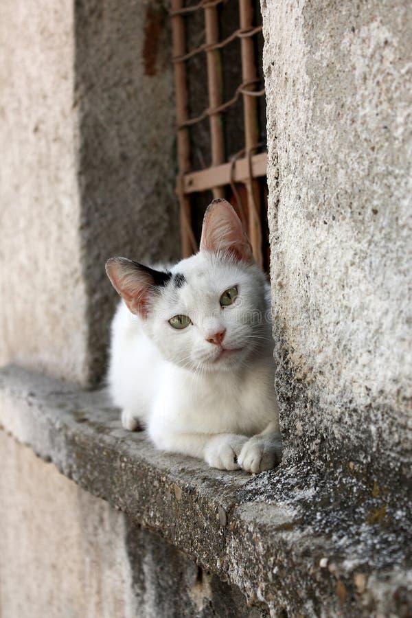 Γάτα στον τοίχο στοκ εικόνα