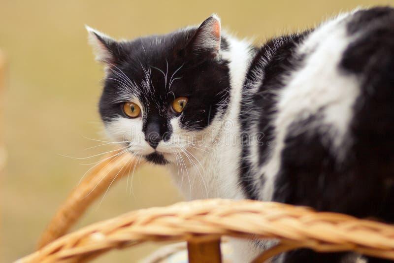 Γάτα στο λίκνισμα της καρέκλας στοκ εικόνες