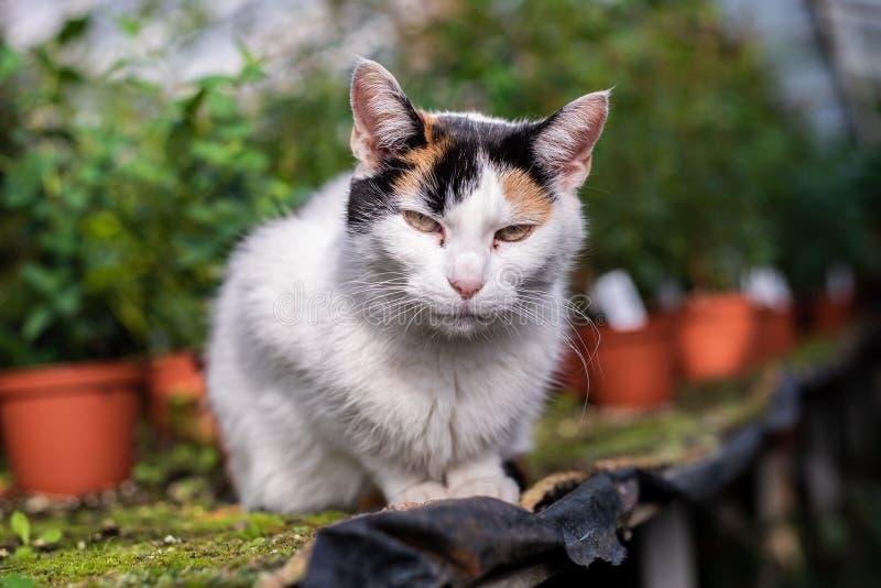 Γάτα στο θερμοκήπιο στοκ φωτογραφίες με δικαίωμα ελεύθερης χρήσης