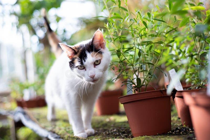 Γάτα στο θερμοκήπιο στοκ φωτογραφία