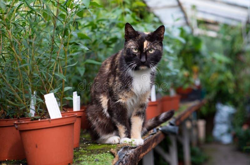 Γάτα στο θερμοκήπιο στοκ φωτογραφίες