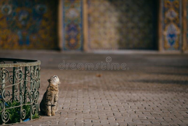 Γάτα στο Ιράν στοκ φωτογραφία