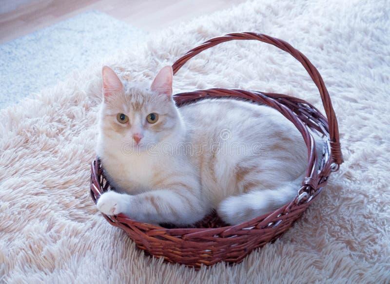 Γάτα στο καλάθι στοκ φωτογραφίες με δικαίωμα ελεύθερης χρήσης