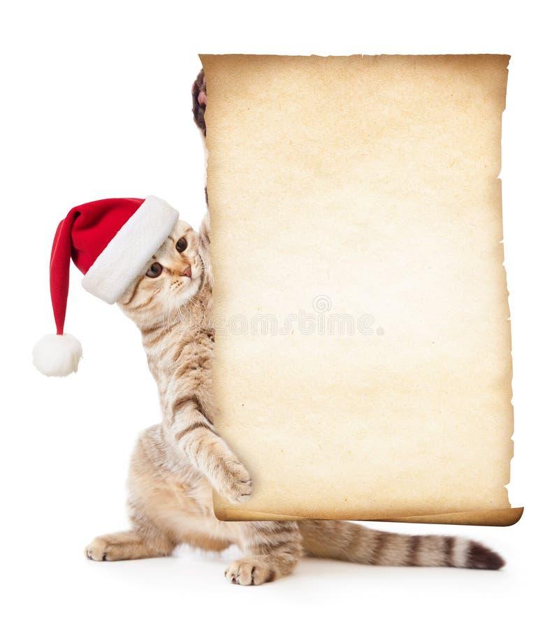 Γάτα στο καπέλο Santa με το παλαιά έγγραφο ή την περγαμηνή στοκ φωτογραφία με δικαίωμα ελεύθερης χρήσης