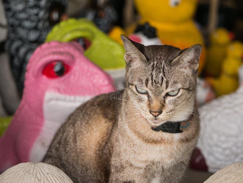 Γάτα στο κατάστημα κουκλών στοκ φωτογραφίες
