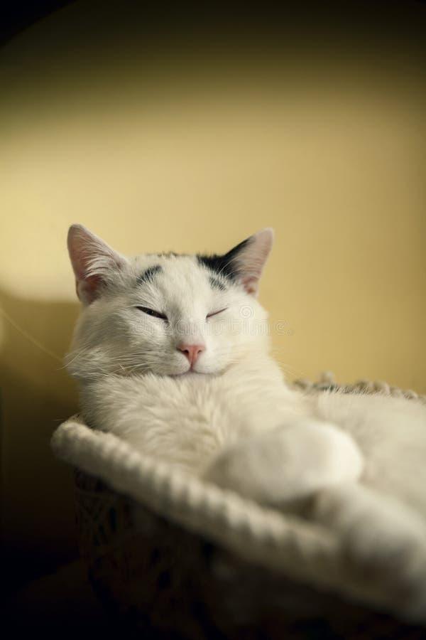 Γάτα στο καλάθι στοκ φωτογραφία