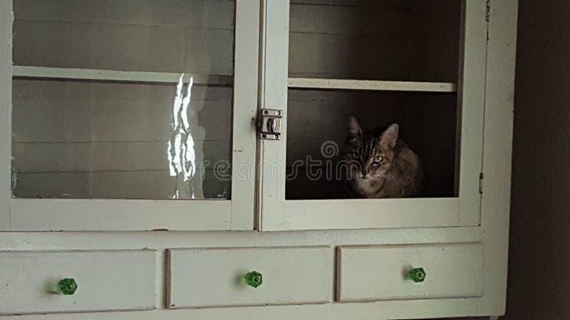 Γάτα στο ντουλάπι στοκ φωτογραφίες με δικαίωμα ελεύθερης χρήσης
