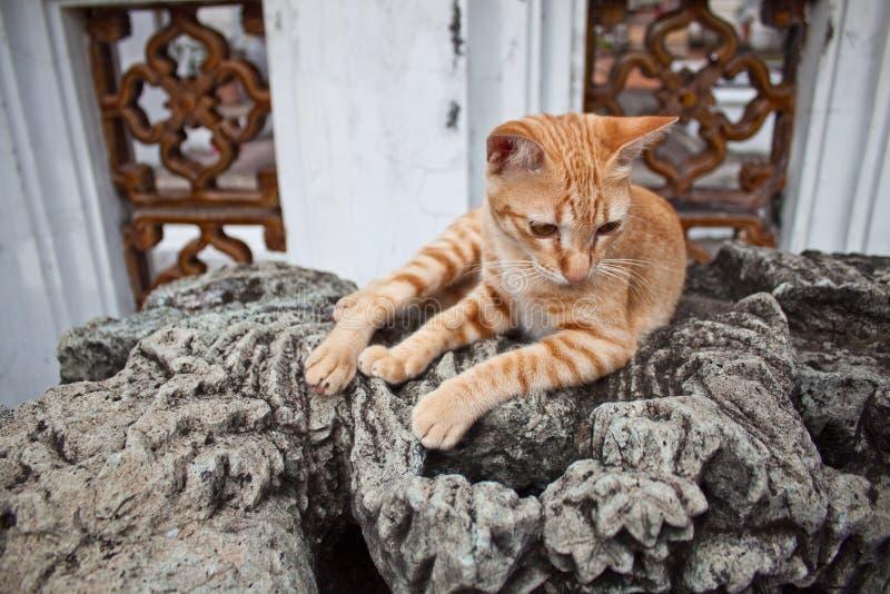 Γάτα στο παλαιό άγαλμα στοκ εικόνα με δικαίωμα ελεύθερης χρήσης