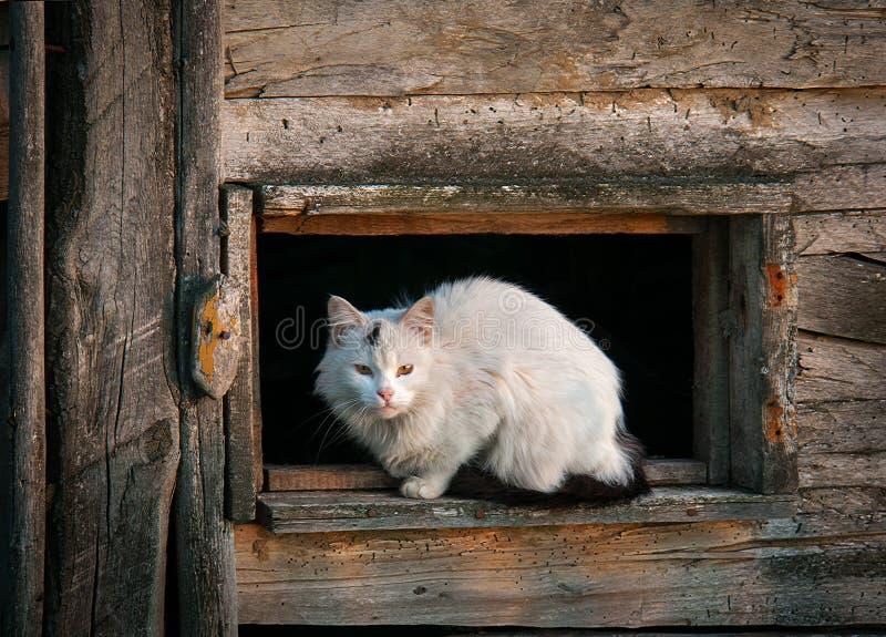 Γάτα στο παράθυρο Η του χωριού σκηνή στοκ φωτογραφία