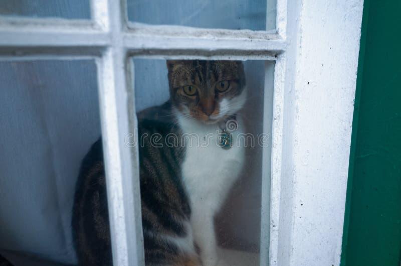 Γάτα στο παράθυρο που κοιτάζει έξω στοκ εικόνες