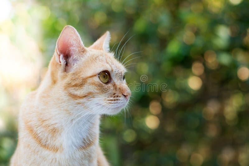 Γάτα στο πράσινο υπόβαθρο bokeh στοκ φωτογραφία με δικαίωμα ελεύθερης χρήσης
