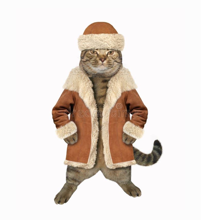 Γάτα στο χειμερινό παλτό 1 στοκ φωτογραφία με δικαίωμα ελεύθερης χρήσης