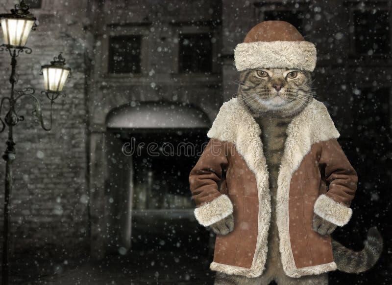 Γάτα στο χειμερινό παλτό 3 στοκ φωτογραφία