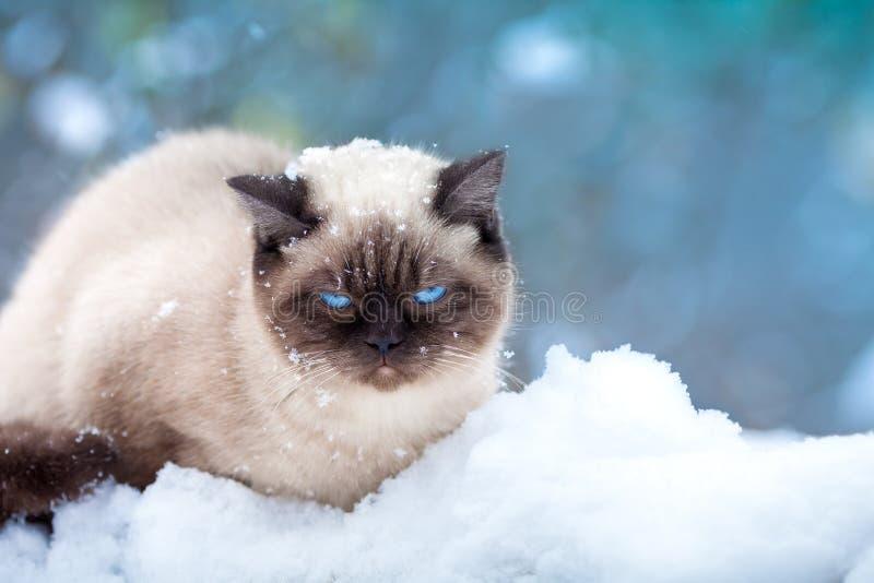 Γάτα στο χιόνι στοκ φωτογραφία με δικαίωμα ελεύθερης χρήσης