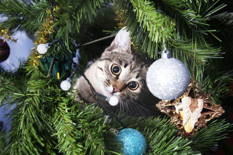 Γάτα στο χριστουγεννιάτικο δέντρο γατάκι άτακτο νέο έτος στοκ φωτογραφία με δικαίωμα ελεύθερης χρήσης