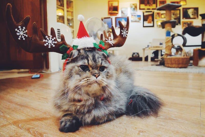 Γάτα ταράνδων στοκ εικόνα με δικαίωμα ελεύθερης χρήσης