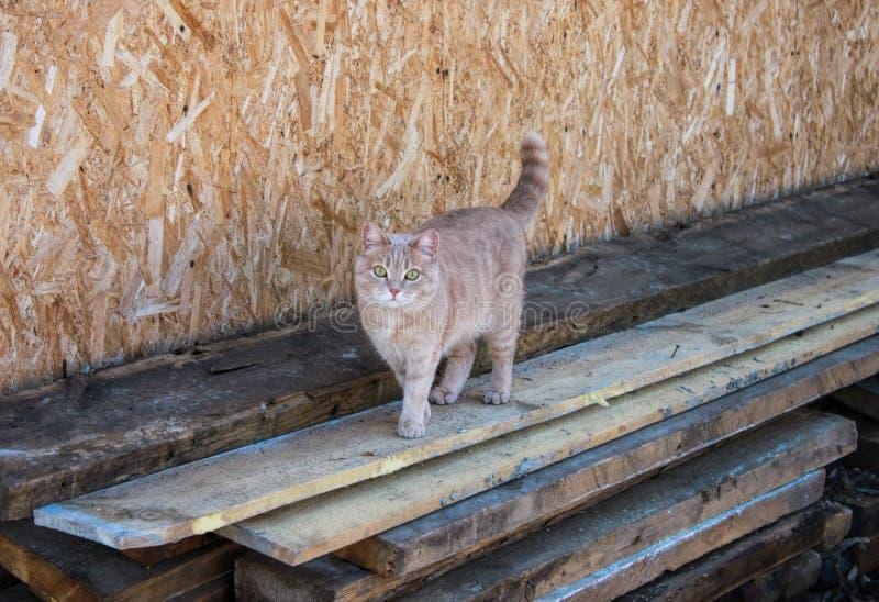 Γάτα τζίντζερ που περπατάει σε ξύλινες σανίδες Ξύλινος τοίχος πίσω στοκ εικόνα με δικαίωμα ελεύθερης χρήσης