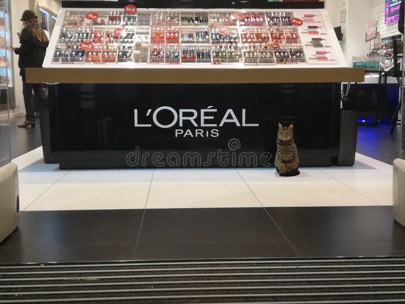 Γάτα του Λ OREAL ΠΑΡΊΣΙ στοκ εικόνες