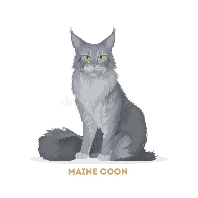 Γάτα του Μαίην Coon διανυσματική απεικόνιση