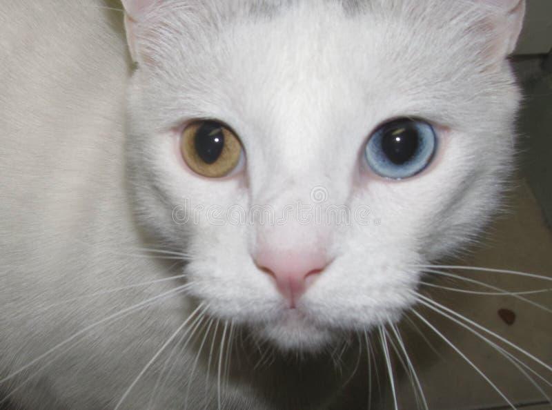 Γάτα του David Bowie στοκ φωτογραφία με δικαίωμα ελεύθερης χρήσης