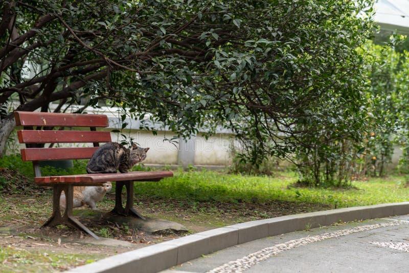 Γάτα των vagrant στο πάρκο στοκ φωτογραφία με δικαίωμα ελεύθερης χρήσης