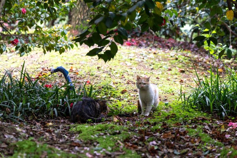 Γάτα των vagrant στο πάρκο στοκ εικόνες