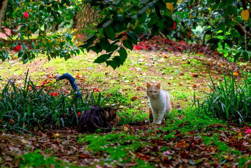 Γάτα των vagrant στο πάρκο στοκ εικόνα με δικαίωμα ελεύθερης χρήσης