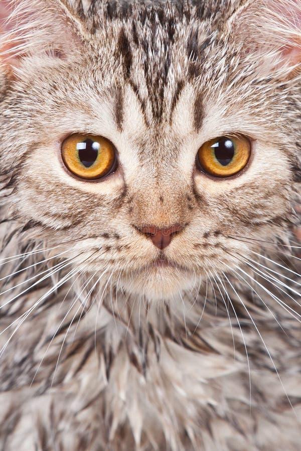 γάτα υγρή Στοκ Εικόνες