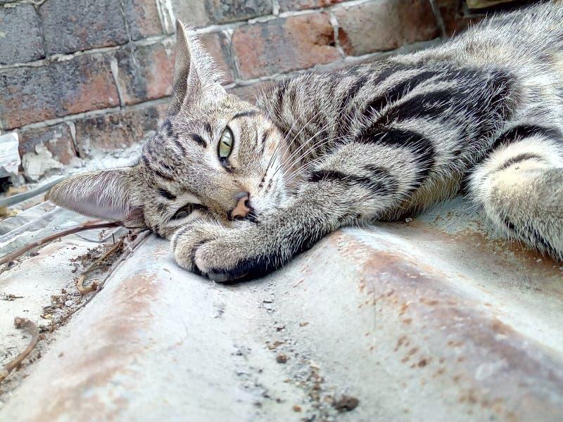 Γάτα φύσης ` s στοκ φωτογραφία με δικαίωμα ελεύθερης χρήσης