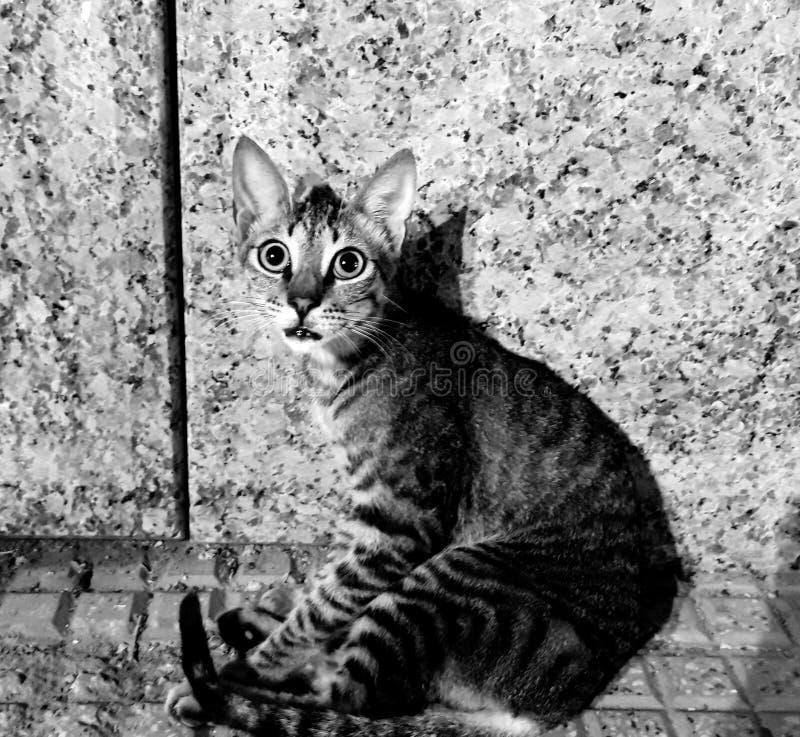 Γάτα χαριτωμένος καλός στοκ φωτογραφία με δικαίωμα ελεύθερης χρήσης